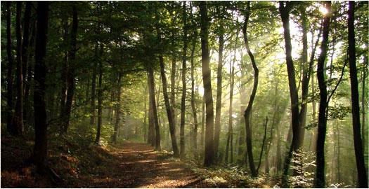 Urlaub im Bayerischen Wald in Bayern